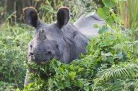 Chitwan National Park, a wildlife haven_2