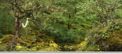parsa-wildlife-reserve