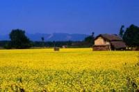terai plains of nepal